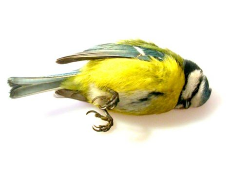Mac Edin - Avdelningen för nedfallna fåglar